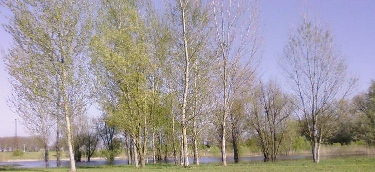 Parco Fluviale di Lastra a Signa
