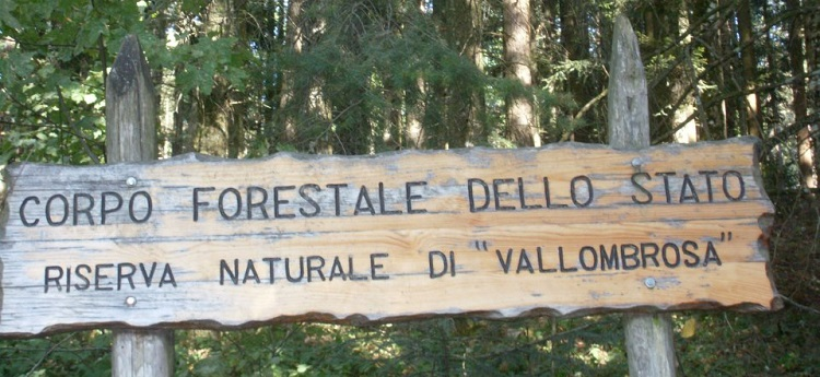 Riserva di Vallombrosa